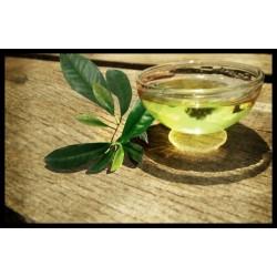 Tea Tree Oil 100% - čajovníkový olej 100 ml