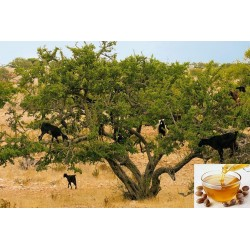 Arganový olej 35 ml, potravinářský