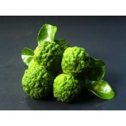 Bergamotová silice z ekologického zemědělství, 30 ml