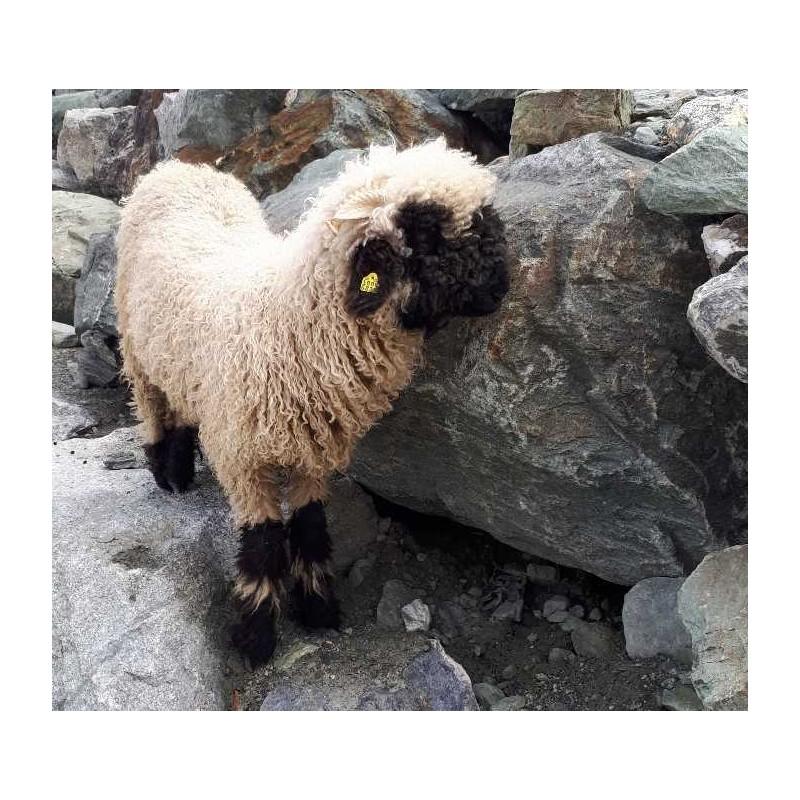 Lanolin se vyrábí z ovčí vlny